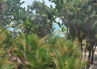 Sabal_Beach_Belize_Cabanas_View_From_Deck